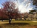 1 Chome-3 Nomizu, Chōfu-shi, Tōkyō-to 182-0031, Japan - panoramio (1).jpg