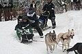 2012 Iditarod (6804403308).jpg
