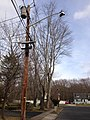 2014-12-30 12 43 35 Utility pole and old incandescent street light fixture attached to a more modern support along Marquis Road in Ewing, New Jersey.JPG
