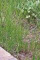 2015.06.09 18.15.56 IMG 2711 - Flickr - andrey zharkikh.jpg
