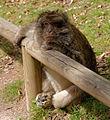 2016-04-21 15-00-19 montagne-des-singes.jpg