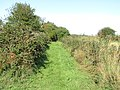 2018-09-07 Footpath along side Brake Hill Plantation, Gimingham (2).JPG