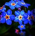 20290520 Wildblumen .jpg