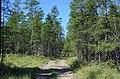 373 Заход в лес возле первого озера.jpg