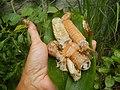 4087Ants Common houseflies foods delicacies of Bulacan 10.jpg
