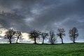7 Trees - Castellarano (RE) Italy - December 26, 2013 - panoramio.jpg