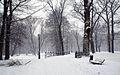 8756m Park w Pszczynie . Foto Barbara Maliszewska.jpg