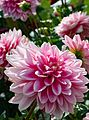 ADD SOME COLOUR TO YOUR LIFE (FLOWERS IN A PUBLIC PARK)-120119 (29194470811).jpg
