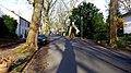 AL-D-0008 Platanus x acerifolia alley on Pigageallee, Benrath. Reader-18.jpg