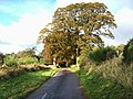 A Narrow Country Road - geograph.org.uk - 1038206.jpg