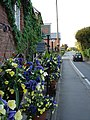 A Splash of Colour - geograph.org.uk - 800745.jpg
