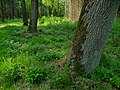 A covered tree trunk in the moorlands of Fochterloerveen; North-Netherlands, spring 2012.jpg
