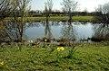 A pond on Stonard's Farm - geograph.org.uk - 394327.jpg