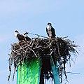 Acadia 2012 08 23 0196 (7958554502).jpg