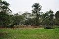Acharya Jagadish Chandra Bose Indian Botanic Garden - Howrah 2011-02-20 1657.JPG