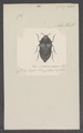 Acherusia - Print - Iconographia Zoologica - Special Collections University of Amsterdam - UBAINV0274 023 08 0002.tif