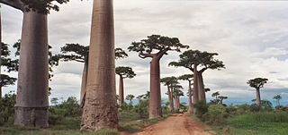 Avenue of the Baobabs protected area