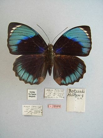 Holotype - A holotype with red type label affixed