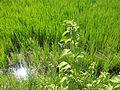 Agricultura a la Ribera - 31.jpeg