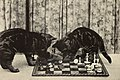Alexander and some other cats (1929) (17761798018) (cropped).jpg