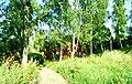 Alexandrov, Vladimir Oblast, Russia - panoramio - spam00 (13).jpg