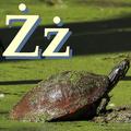 Alfabet zwierząt - literka Ż.png