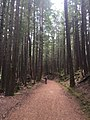 Alice Lake Provincial Park Trail.jpg
