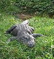 Alligator mississippiensis (4),.jpg