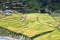 Alonzo-lyons-paddy-nepal-rukum-IMG 7564.jpg