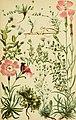 Alpenflora; die verbreitetsten Alpenpflanzen von Bayern, Österreich und der Schweiz (1922) (18105957202).jpg
