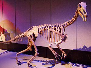 Alxasaurus - Restored skeleton, RTM