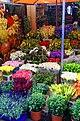 Amsterdam - Singel - Flowermarket.jpg