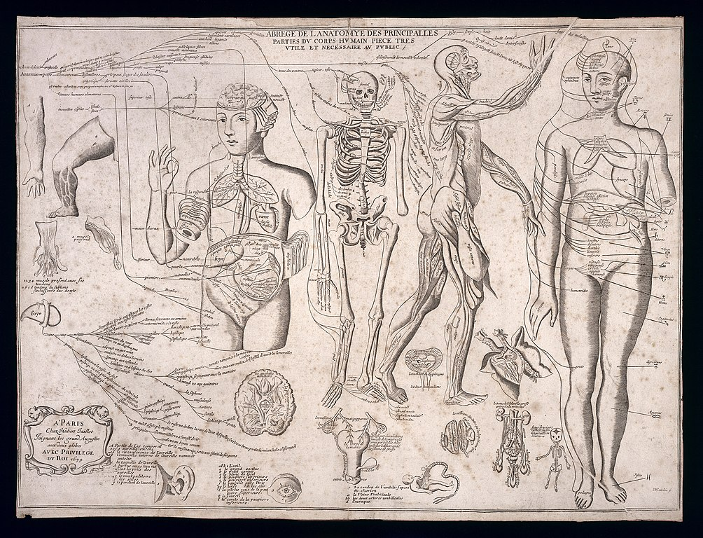 Fileanatomy Of The Principal Parts Of The Human Body Wellcome