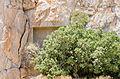 Ancient rock cut tomb 1 - Santorini - Greece - 02.jpg