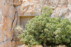 Ancient rock cut tomb 1 - Santorini - Greece - 02.jpg
