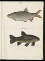 Animal drawings collected by Felix Platter, p1 - (184).jpg