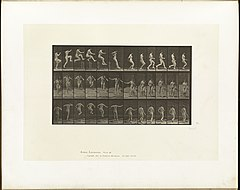Animal locomotion. Plate 155 (Boston Public Library).jpg