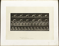Animal locomotion. Plate 471 (Boston Public Library).jpg
