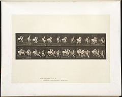 Animal locomotion. Plate 688 (Boston Public Library).jpg