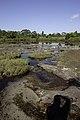Anodard Pond - Phu Kradueng National Park 03.jpg