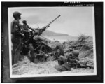Anti-aircraft bofors gun in at position on a mound overlooking the beach in Algeria, 8e00438u.tif