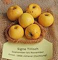 Apfel 148 Signe Tillisch (fcm).jpg