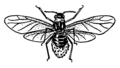 Aphid (PSF).png