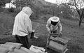 Apiculteurs - Installant du sirop sur un nourisseur - 1.jpg