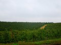 Apple Orchard - panoramio.jpg