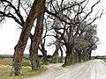 Arboleda - panoramio.jpg