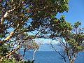 Arbutus grove (9365216683).jpg