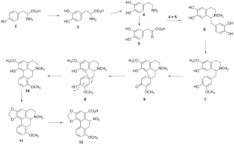 Aristolochic acid - Biosynthetic pathway of aristolochic acid