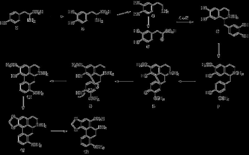 File:Aristolochic acid biosynthesis.png