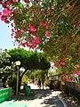 Armona Island (Portugal) - 49707136193.jpg